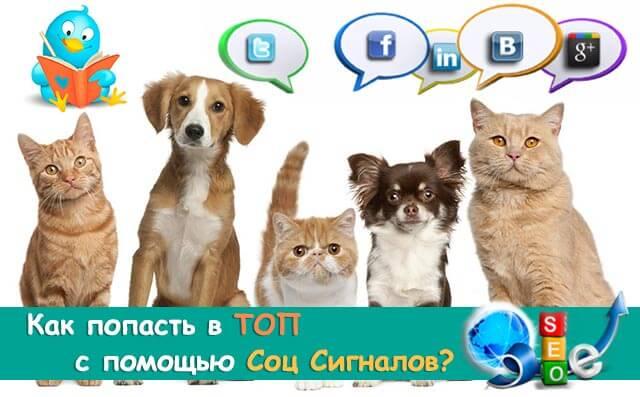 социальные-сигналы